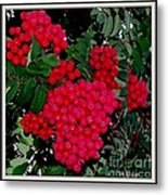 Splash Of Red Berries Metal Print