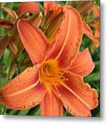 Splendid Day Lily Metal Print