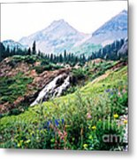 Splendid Wonder Metal Print