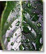 Split Leaf Metal Print