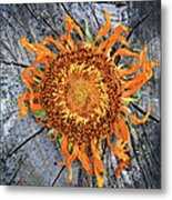 Split Sunflower Metal Print