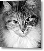 Spooleete. Cat Portrait In Black And White. Metal Print