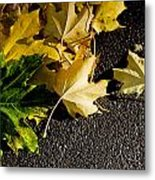 Spotlight Metal Print by Michael Murphy