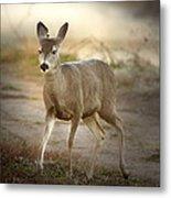 Spotlighted Mule Deer Metal Print