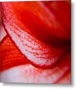 Spots Of A Lily Metal Print by Kim Lagerhem