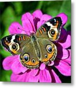 Spotted Butterfly On Pink Flower Metal Print