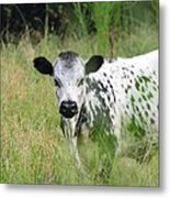 Spotted Cow In The Forest Metal Print