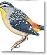 Spotted Diamondbird Metal Print