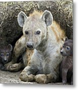 Spotted Hyena Mother And Pups Metal Print