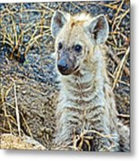 Spotted Hyena Pup In Kruger National Park-south Africa  Metal Print