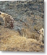 Spotted Hyena Pups In Kruger National Park-south Africa Metal Print