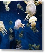 Spotted Jelly Fish 5d24951 Metal Print