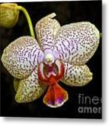 Spotted Orchid Metal Print