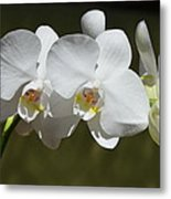 Spray Of Beautiful White Orchids Metal Print