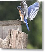 Spread Your Wings Metal Print