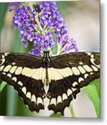 Spread Your Wings My Little Butterfly  Metal Print