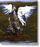 Spread Your Wings Metal Print by Susan Leggett