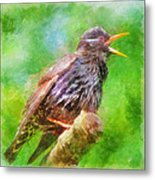 Spreading Bird Word Around Metal Print