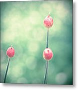 Spring Allium Buds Metal Print