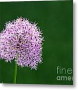 Spring Allium Metal Print