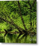 Spring Along West Fork River Metal Print by Thomas R Fletcher