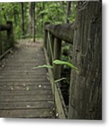 Spring And All Metal Print