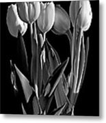 Spring Beauties Bw Metal Print