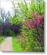 Spring Blooms Along The Path Metal Print