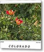 Spring Blooms In Colorado Metal Print
