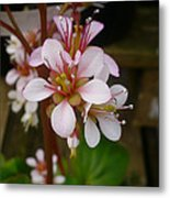Spring Blooms Of 2013 D Metal Print