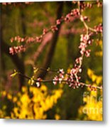 Spring Blossoms I Metal Print