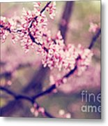 Spring Blossoms II Metal Print