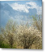 Spring Blossoms Storm Approaching Metal Print