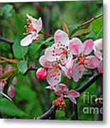 Spring Blossoms West Virginia Metal Print
