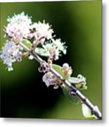 Spring Blossoms White 031015aa Metal Print