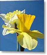Spring Blue Sky Yellow Daffodil Flowers Art Prints Metal Print by Baslee Troutman