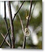 Spring Branches 1 Metal Print