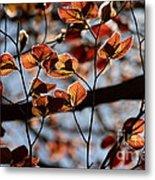 Spring Canopy Metal Print