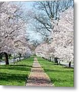 Spring Cherry Trees Metal Print