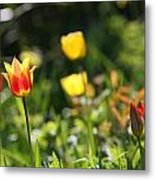 Spring Colour Metal Print