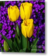 Spring Colours Metal Print