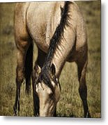 Spring Creek Basin Wild Horse Grazing Metal Print