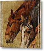 Spring Creek Basin Wild Horses Metal Print