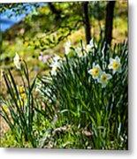 Spring Daffodils.park Keukenhof Metal Print