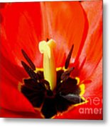 Red Tulip In Spring Metal Print