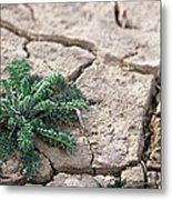 Breaking Of The Drought Metal Print