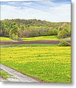 Spring Farm Landscape With Dirt Road And Dandelions Maine Metal Print