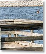 Spring Flight Metal Print