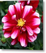 Spring Flower 1 Metal Print