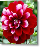 Red Spring Flower Metal Print